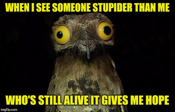 Weird Stuff I Do Potoo | WHEN I SEE SOMEONE STUPIDER THAN ME WHO'S STILL ALIVE IT GIVES ME HOPE | image tagged in memes,weird stuff i do potoo | made w/ Imgflip meme maker
