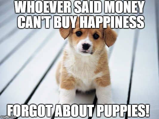WHOEVER SAID MONEY CAN'T BUY HAPPINESS FORGOT ABOUT PUPPIES! | image tagged in cute puppy 1 | made w/ Imgflip meme maker