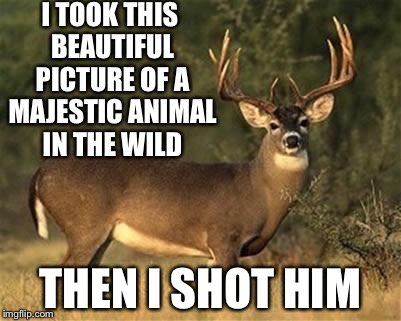 Big Buck | I TOOK THIS BEAUTIFUL PICTURE OF A MAJESTIC ANIMAL IN THE WILD THEN I SHOT HIM | image tagged in big buck | made w/ Imgflip meme maker