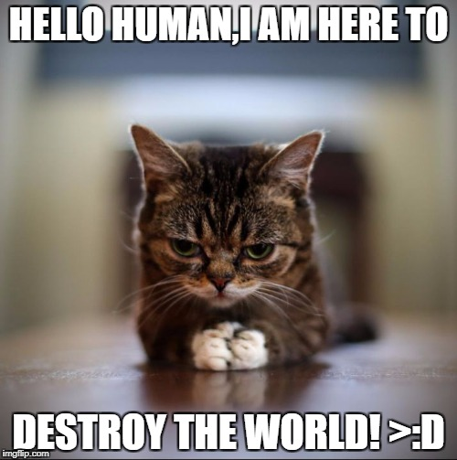 HELLO HUMAN,I AM HERE TO DESTROY THE WORLD! >:D | image tagged in evil lil bub | made w/ Imgflip meme maker