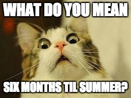shocked | WHAT DO YOU MEAN SIX MONTHS TIL SUMMER? | image tagged in shocked | made w/ Imgflip meme maker