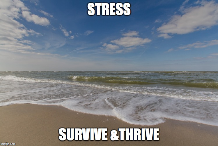 week 4 | STRESS SURVIVE &THRIVE | image tagged in stress | made w/ Imgflip meme maker