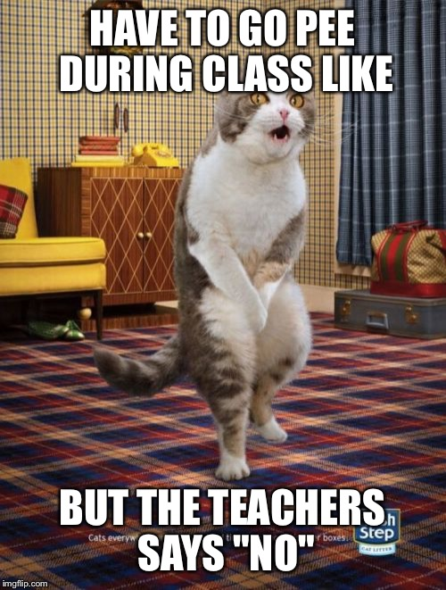 "Gotta Go Cat | HAVE TO GO PEE DURING CLASS LIKE BUT THE TEACHERS SAYS ""NO"" 