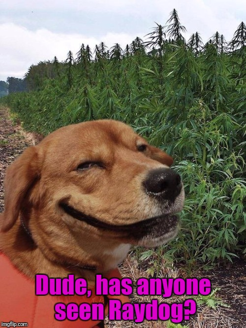 Weed Dog | Dude, has anyone seen Raydog? | image tagged in weed dog | made w/ Imgflip meme maker