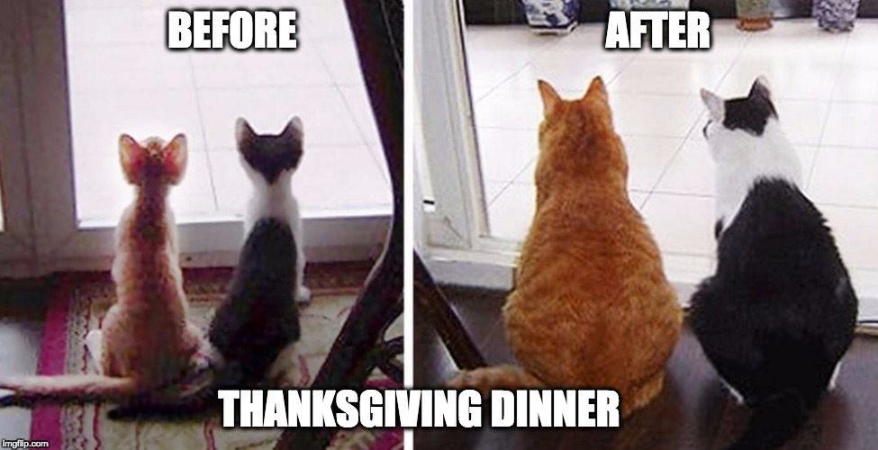 fat cats | BEFORE                                       AFTER THANKSGIVING DINNER | image tagged in fat cats | made w/ Imgflip meme maker