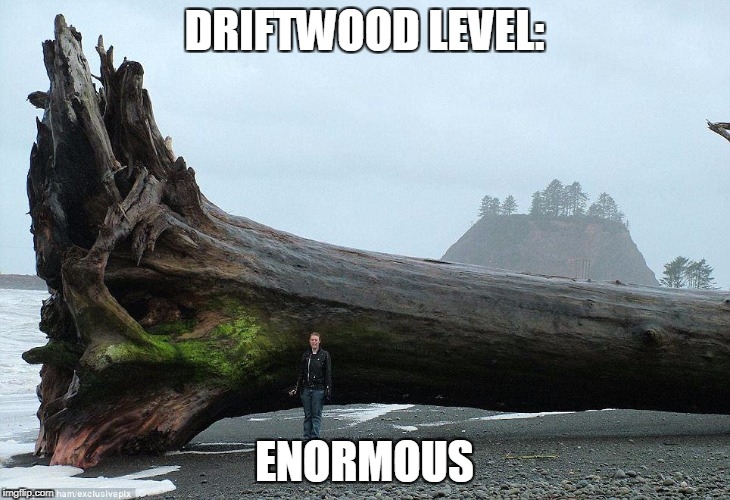Huge wood | DRIFTWOOD LEVEL: ENORMOUS | image tagged in wood,level | made w/ Imgflip meme maker