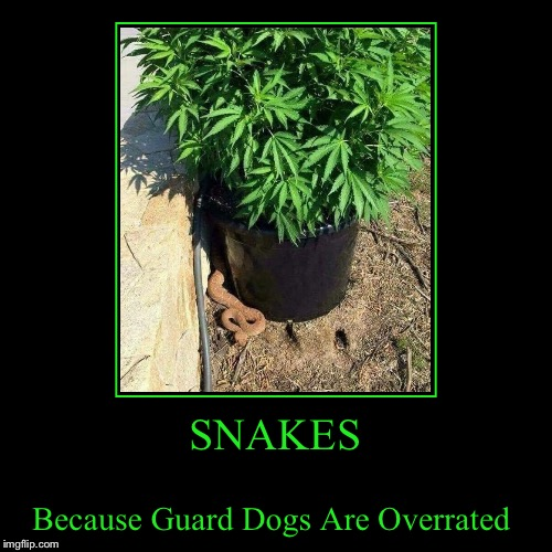 SNAKES | Because Guard Dogs Are Overrated | image tagged in funny,demotivationals,lynch1979,lol | made w/ Imgflip demotivational maker