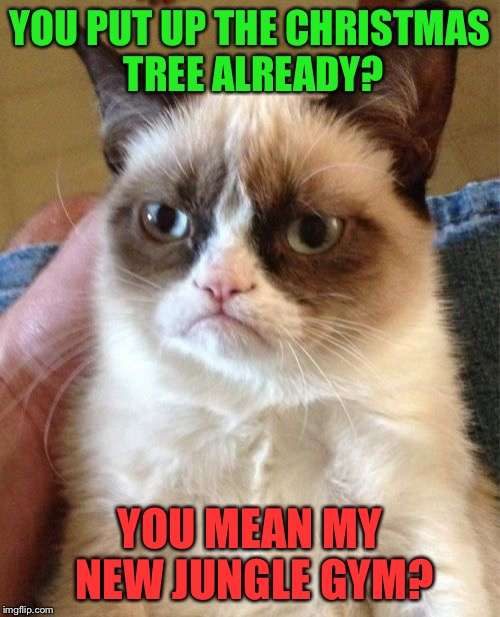 Grumpy Cat Meme | YOU PUT UP THE CHRISTMAS TREE ALREADY? YOU MEAN MY NEW JUNGLE GYM? | image tagged in memes,grumpy cat | made w/ Imgflip meme maker