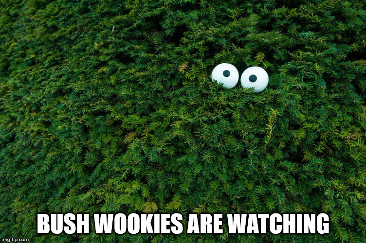 BUSH WOOKIES ARE WATCHING | image tagged in bush wookie | made w/ Imgflip meme maker