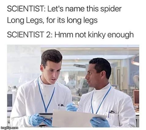 Daddy Long Legs | image tagged in spider | made w/ Imgflip meme maker