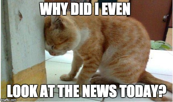 WHY DID I EVEN LOOK AT THE NEWS TODAY? | image tagged in cats,breaking news,gossip | made w/ Imgflip meme maker