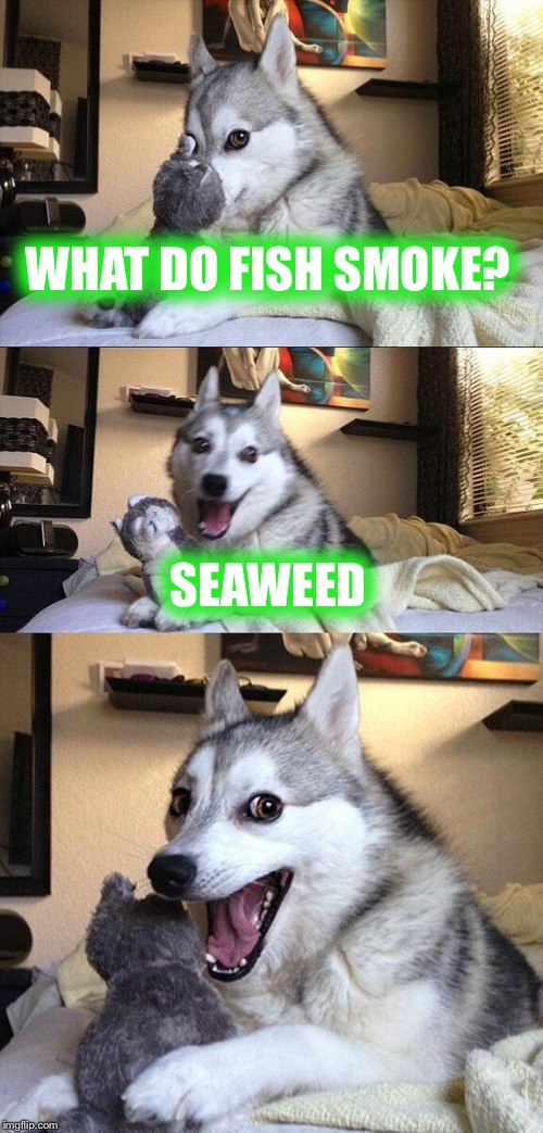 Bad Pun Dog Meme | WHAT DO FISH SMOKE? SEAWEED | image tagged in memes,bad pun dog | made w/ Imgflip meme maker