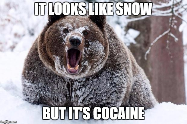 Cocaine bear | IT LOOKS LIKE SNOW BUT IT'S COCAINE | image tagged in memes,cocaine | made w/ Imgflip meme maker