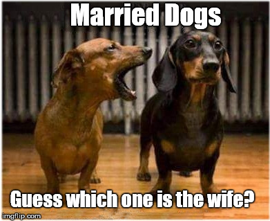 Together Till Death Do Them Part | Married Dogs Guess which one is the wife? | image tagged in married dogs,wow dog,funny meme | made w/ Imgflip meme maker