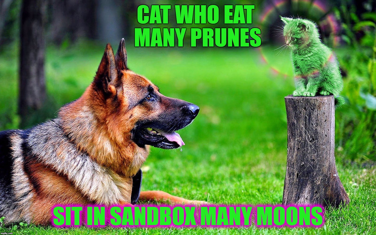 CAT WHO EAT MANY PRUNES SIT IN SANDBOX MANY MOONS | image tagged in grasshopper raydog and wise raycat,memes,raycat,raydog | made w/ Imgflip meme maker