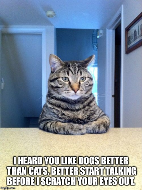Take A Seat Cat Meme | I HEARD YOU LIKE DOGS BETTER THAN CATS. BETTER START TALKING BEFORE I SCRATCH YOUR EYES OUT. | image tagged in memes,take a seat cat | made w/ Imgflip meme maker