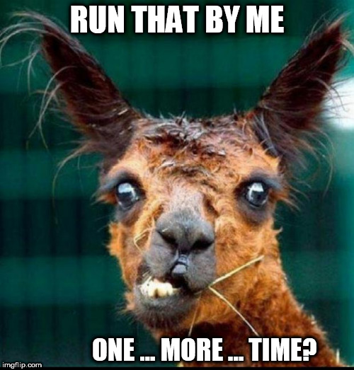RUN THAT BY ME ONE ... MORE ... TIME? | image tagged in animal | made w/ Imgflip meme maker