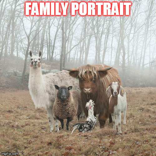 FAMILY PORTRAIT | image tagged in animals | made w/ Imgflip meme maker