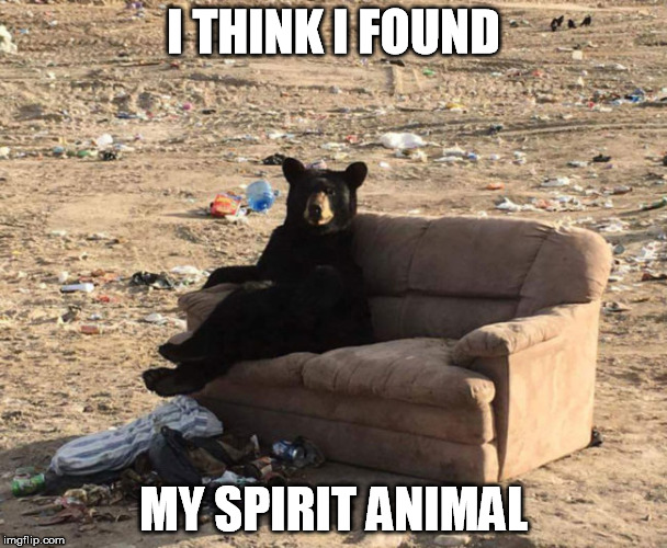 What is your spirit animal? | I THINK I FOUND MY SPIRIT ANIMAL | image tagged in spirit animal | made w/ Imgflip meme maker