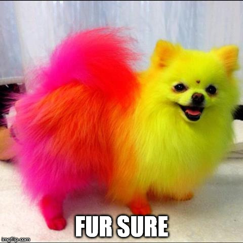 FUR SURE | made w/ Imgflip meme maker