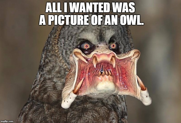 ALL I WANTED WAS A PICTURE OF AN OWL. | image tagged in creep,owls,google,creepy | made w/ Imgflip meme maker