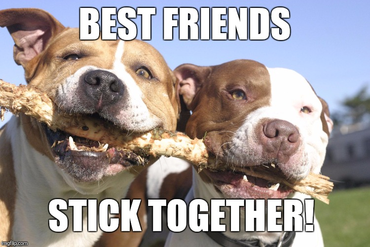 BEST FRIENDS STICK TOGETHER! | image tagged in dogs with stick | made w/ Imgflip meme maker