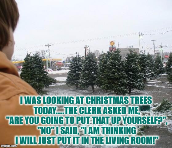 "Christmas trees |  I WAS LOOKING AT CHRISTMAS TREES TODAY.....THE CLERK ASKED ME, ""ARE YOU GOING TO PUT THAT UP YOURSELF?"", ""NO"" I SAID, ""I AM THINKING I WILL JUST PUT IT IN THE LIVING ROOM!"" 