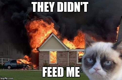 Burn Kitty Meme | THEY DIDN'T FEED ME | image tagged in memes,burn kitty,grumpy cat | made w/ Imgflip meme maker