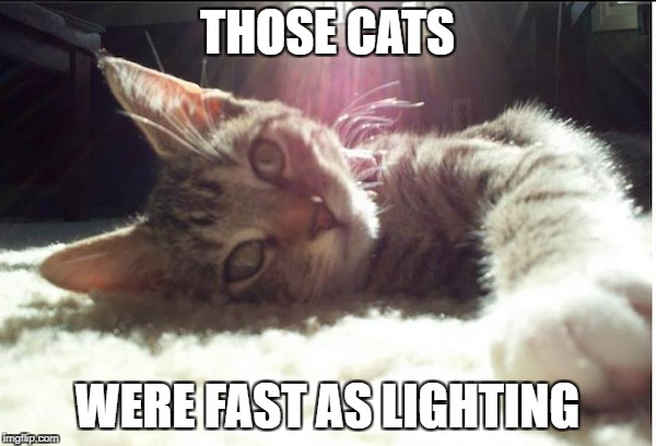 Clawless Kitty | THOSE CATS WERE FAST AS LIGHTING | image tagged in clawless kitty | made w/ Imgflip meme maker