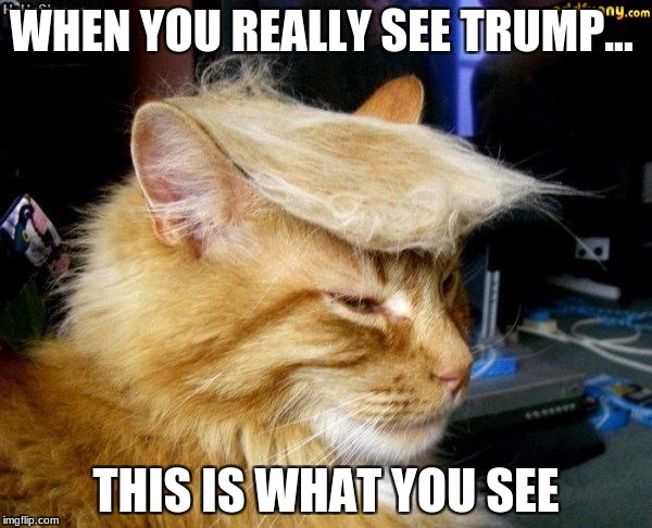 donald trump cat |  WHEN YOU REALLY SEE TRUMP... THIS IS WHAT YOU SEE | image tagged in donald trump cat | made w/ Imgflip meme maker