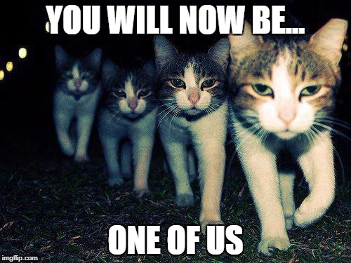 Wrong Neighboorhood Cats Meme | YOU WILL NOW BE... ONE OF US | image tagged in memes,wrong neighboorhood cats | made w/ Imgflip meme maker