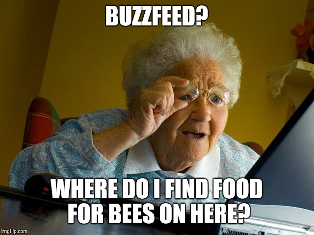 Be sure to catch their hive-stream. | BUZZFEED? WHERE DO I FIND FOOD FOR BEES ON HERE? | image tagged in memes,grandma finds the internet,buzzfeed | made w/ Imgflip meme maker