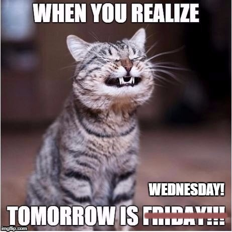 Happy Wednesday? | WEDNESDAY! ----------- | image tagged in thanksgiving,holiday,kittehs | made w/ Imgflip meme maker