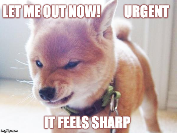 Urgent Pup | LET ME OUT NOW!         URGENT IT FEELS SHARP | image tagged in monday face,animals,dog,stupid | made w/ Imgflip meme maker