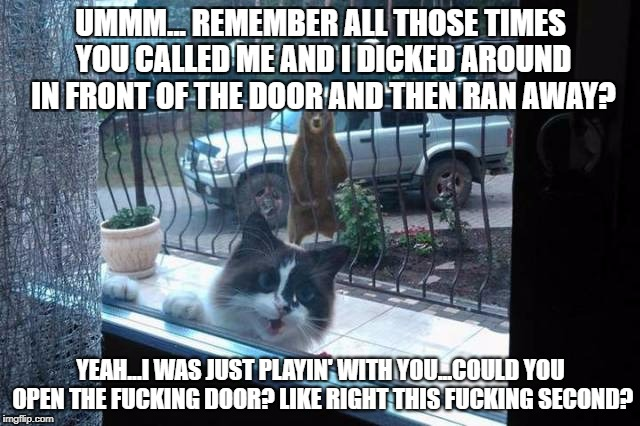 Bear and Cat | UMMM... REMEMBER ALL THOSE TIMES YOU CALLED ME AND I DICKED AROUND IN FRONT OF THE DOOR AND THEN RAN AWAY? YEAH...I WAS JUST PLAYIN' WITH YO | image tagged in bearandcat | made w/ Imgflip meme maker