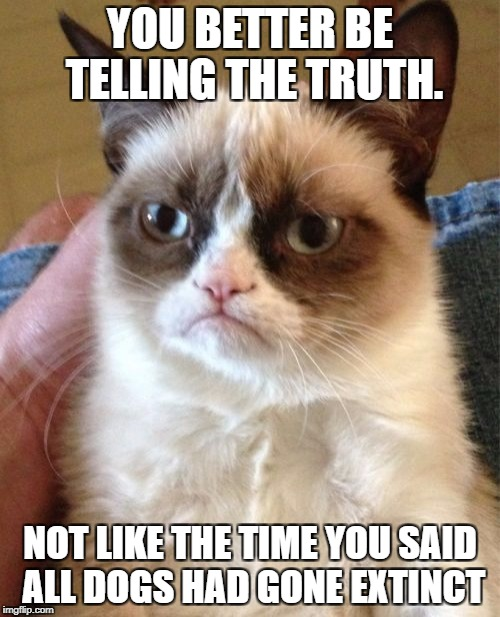 Grumpy Cat Meme | YOU BETTER BE TELLING THE TRUTH. NOT LIKE THE TIME YOU SAID ALL DOGS HAD GONE EXTINCT | image tagged in memes,grumpy cat | made w/ Imgflip meme maker