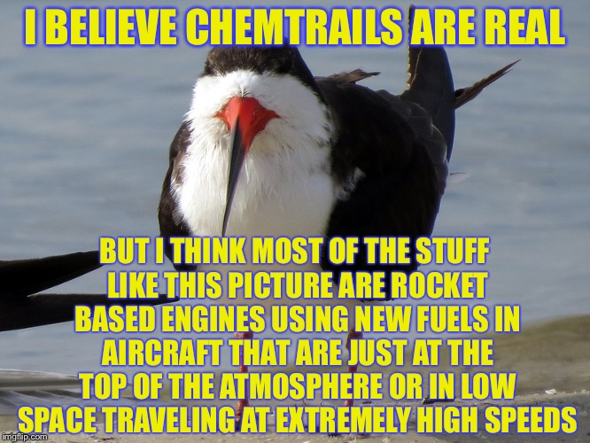 Even Less Popular Opinion Bird | I BELIEVE CHEMTRAILS ARE REAL BUT I THINK MOST OF THE STUFF LIKE THIS PICTURE ARE ROCKET BASED ENGINES USING NEW FUELS IN AIRCRAFT THAT ARE  | image tagged in even less popular opinion bird | made w/ Imgflip meme maker