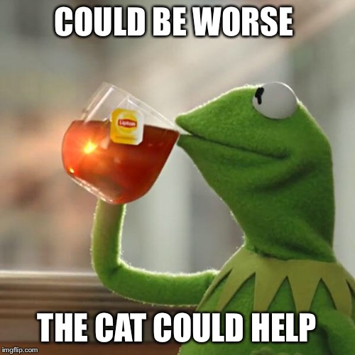 But Thats None Of My Business Meme | COULD BE WORSE THE CAT COULD HELP | image tagged in memes,but thats none of my business,kermit the frog | made w/ Imgflip meme maker