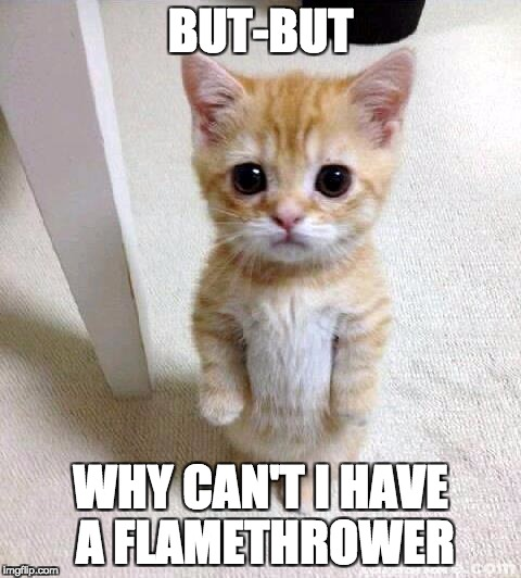 Cute Cat Meme | BUT-BUT WHY CAN'T I HAVE A FLAMETHROWER | image tagged in memes,cute cat | made w/ Imgflip meme maker