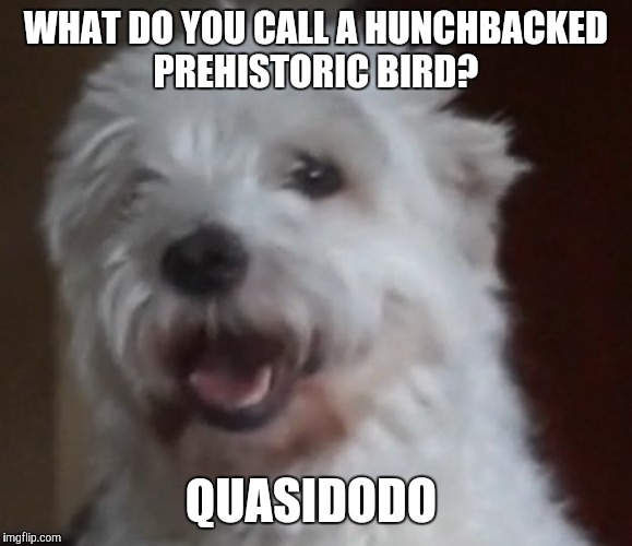 WHAT DO YOU CALL A HUNCHBACKED PREHISTORIC BIRD? QUASIDODO | image tagged in bad joke dog | made w/ Imgflip meme maker