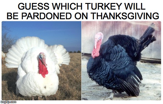 White Meat Or Dark? | GUESS WHICH TURKEY WILL BE PARDONED ON THANKSGIVING | image tagged in thanksgiving,pardon | made w/ Imgflip meme maker