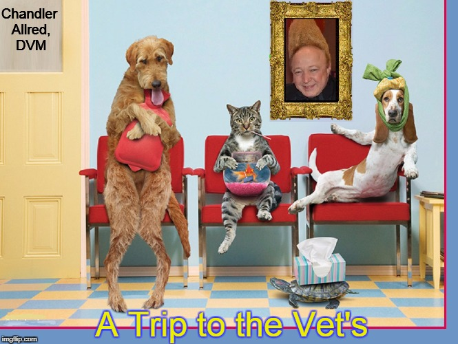 Can You Imagine? All 5 were sick at once! |  Chandler Allred, DVM; A Trip to the Vet's | image tagged in vince vance,dog memes,cat memes,goldfish,turtles,veterinarian | made w/ Imgflip meme maker