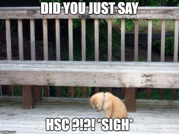Sad Puppy | DID YOU JUST SAY HSC ?!?! *SIGH* | image tagged in sad puppy | made w/ Imgflip meme maker