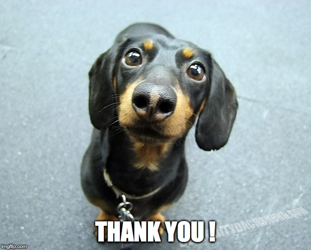 cute daschund puppy | THANK YOU ! | image tagged in cute daschund puppy | made w/ Imgflip meme maker