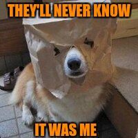I'm not your dog | THEY'LL NEVER KNOW IT WAS ME | image tagged in i'm not your dog | made w/ Imgflip meme maker