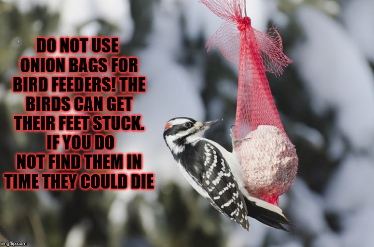 diy birdfeeder | DO NOT USE ONION BAGS FOR BIRD FEEDERS! THE BIRDS CAN GET THEIR FEET STUCK.  IF YOU DO NOT FIND THEM IN TIME THEY COULD DIE | image tagged in diy,diy fails,birds,hobbies,nature | made w/ Imgflip meme maker