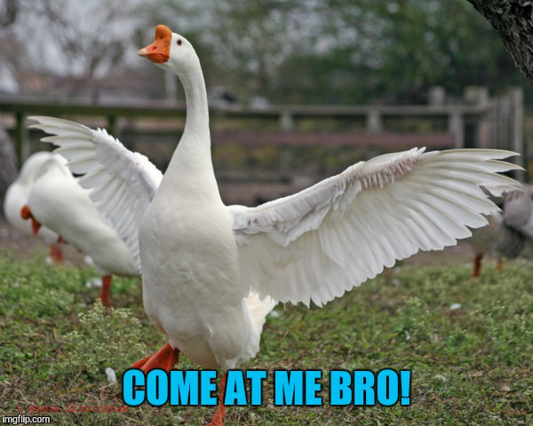 COME AT ME BRO! | made w/ Imgflip meme maker