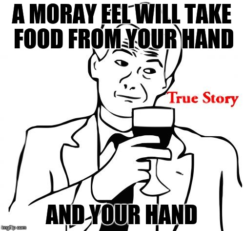 true story | A MORAY EEL WILL TAKE FOOD FROM YOUR HAND AND YOUR HAND | image tagged in true story | made w/ Imgflip meme maker