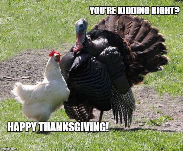 Sarcastic Thanksgiving | HAPPY THANKSGIVING! YOU'RE KIDDING RIGHT? | image tagged in thanksgiving,sarcasm,turkey,turkey day,chicken | made w/ Imgflip meme maker