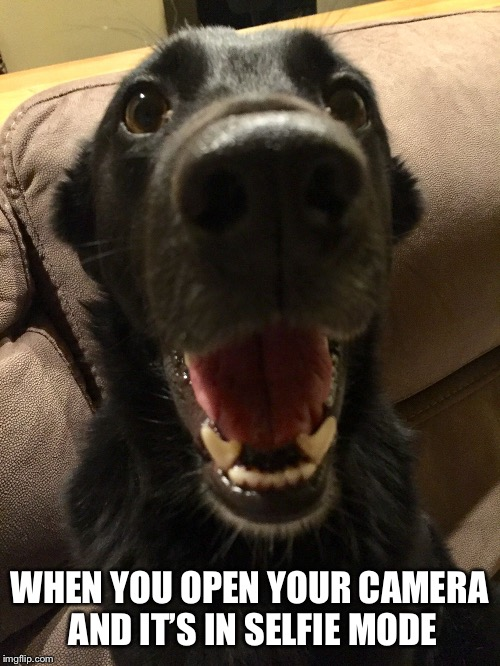 Camera on selfie mode | WHEN YOU OPEN YOUR CAMERA AND IT'S IN SELFIE MODE | image tagged in happy dog face,dogs,funny,funny memes,animals,cute dog | made w/ Imgflip meme maker
